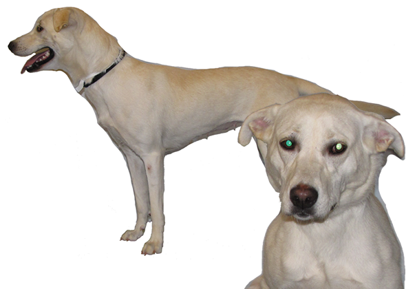 No, You Probably Can't Guess That Dog's Breed — and a New Study