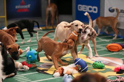 Animal Planet Puppy Bowl X