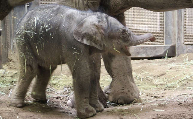 Rozie gave birth to an endangered elephant calf on Oct. 2.