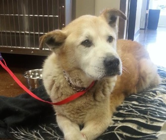 Boomer, 15, was found in the mudslide debris field three miles from his home.