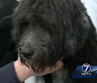 Sparky's owner pulled him from an icy lake, and he helped two men save her after she fell in.