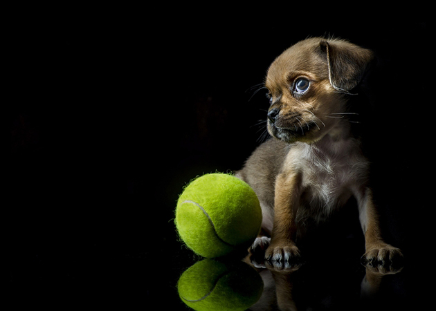 Bubbles With Tennis Ball