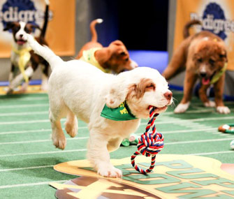 Animal Planet Puppy Bowl XI