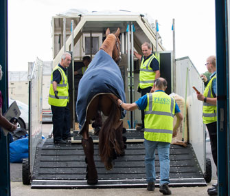 Olympic horses flown to Rio