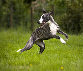 Un tour joué par un chien