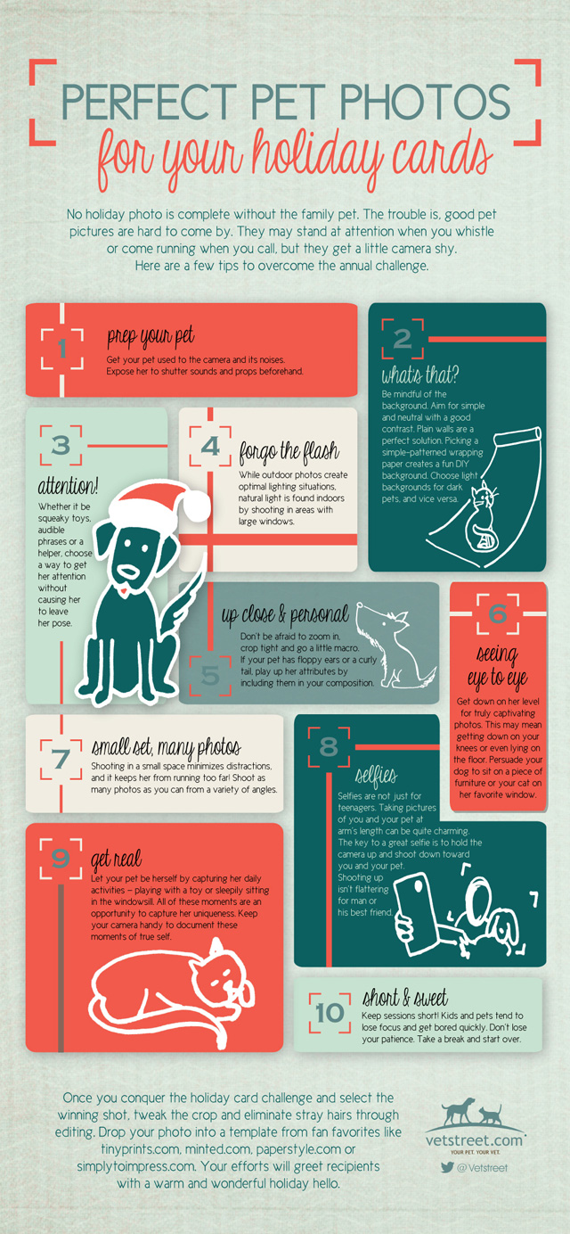 Taking Holiday Pet Photos Infographic