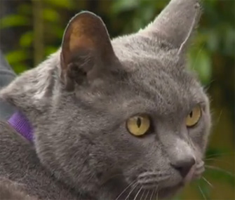 Cat reunited with family after 11 years