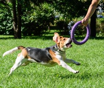 Dog and tug toy