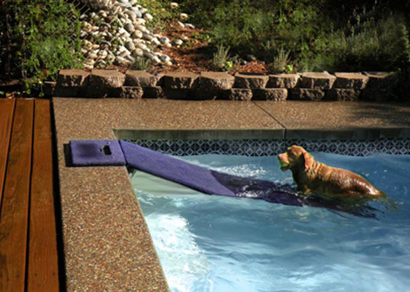 7 products to make pool time with your dog safe and fun for Pool time pools