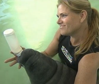 Keeper Jodi Tuzinski feeds baby Ray at the Miami Seaquarium.