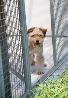 Dog in Kennel Run