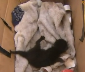 A rescue group has stepped in to help a newborn kitten saved by firefighters battling a wildfire in Los Angeles.