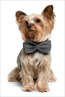 5af764786b8a dog in bow tie. Credit  Tory Burch