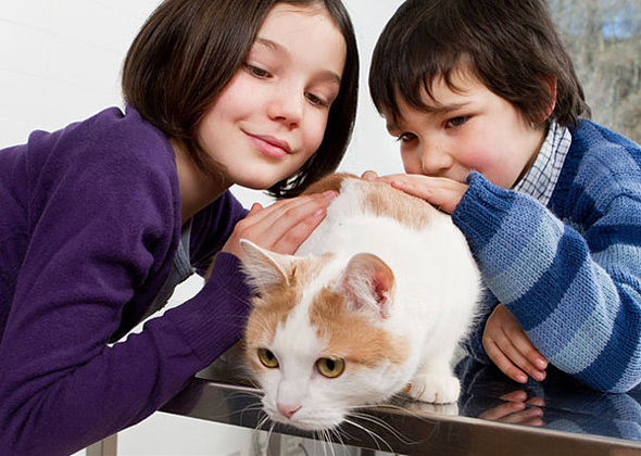 Kids And Cats Together 7 Things To Know To Keep Everyone Safe