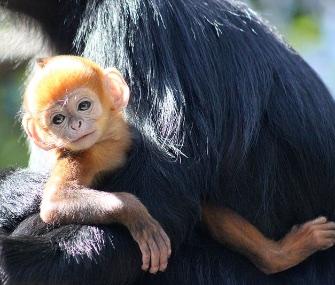 Nangua, whose name is Mandarin for orange, cuddles with his mom.