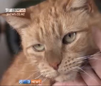 Rory the cat was saved by a blood transfusion from a dog.