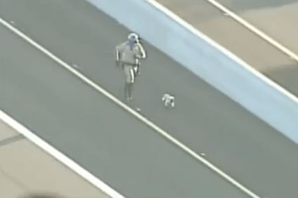 Yorkie on Arizona freeway