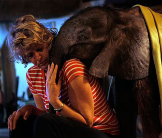 "Moses the baby elephant snuggles with his adoptive ""mom,"" Jenny Webb."