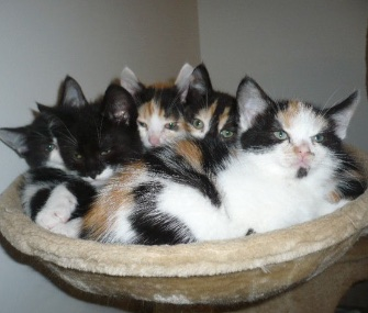 The Westgate Ark cat rehoming center in England is looking for volunteers to cuddle with its kittens.