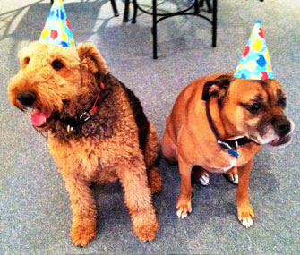 The Things We Do For Love I Throw Birthday Parties My Dogs
