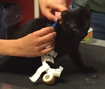 A 4-month-old kitten has a custom 3D-printed leg thanks to art students in Colorado.