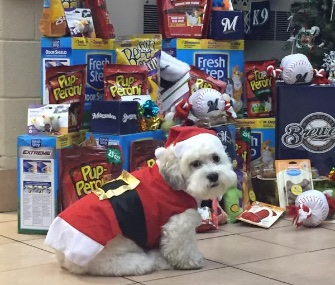 """Santa Hank,"" the Brewers' rescue dog, donned a Santa suit for a recent event at the Wisconsin Humane Society."