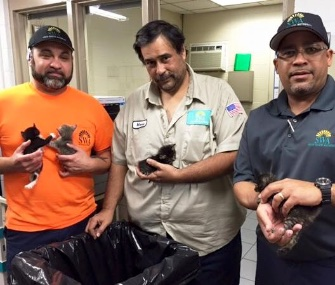 Sanitation workers in Florida found a litter of four kittens in a trash bag.