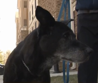 Meko, 14, is credited with alerting his family to a fast-moving fire in their Virginia home.
