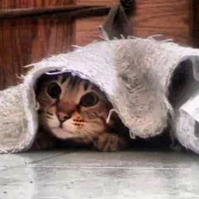 Hide and Seek Cat Under Rug