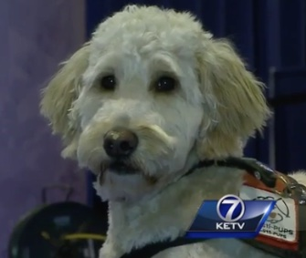 Dozens of therapy dogs are helping ease the stress of swimmers competing to go to the Olympics.
