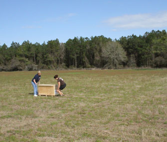 a bobcat in a crate being released into the wild