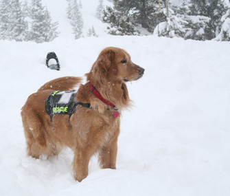 Magic, an avalanche search and rescue dog