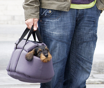 Dachshund puppy in carrier