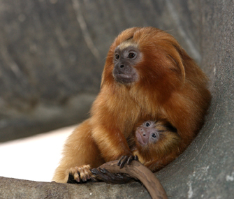 Animals Saved From Extinction By Zoos