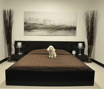 dog on bed in hotel