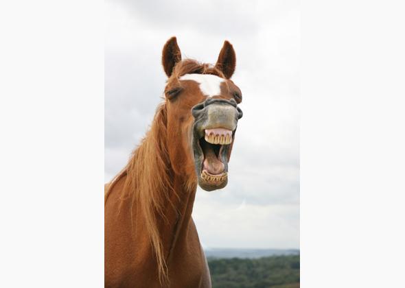 11 Unforgettable Animal Smiles