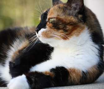 Is There A Connection Between Markings And Personality In Cats