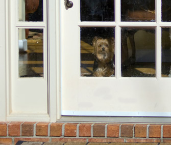 Dog at door