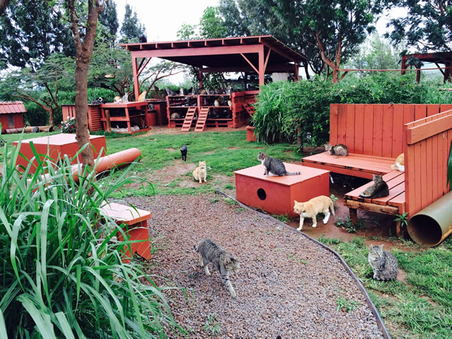 Lanai Animal Rescue Center