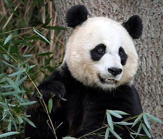 The National Zoo's Mei Xiang gave birth to a cub on Sunday.