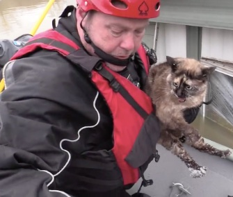 Rescuers from the Humane Society of Missouri saved a cat who was floating in a litterbox.