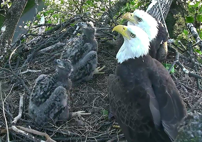 National Arboretum's Baby Bald Eagles Get Their Names