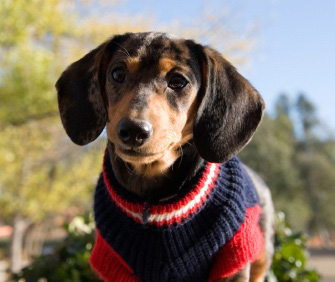 Sweaters And Jackets For Dogs Do They Really Need Them