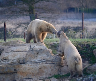 Nissan and Nubby quickly became friends when they met at the U.K.'s Yorkshire Wildlife Park.