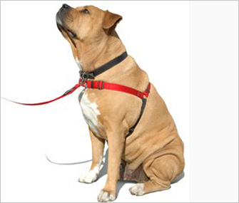 Front Clip Harness: Sense-ation Dog Harness
