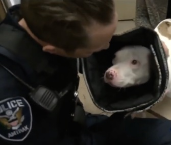 """Miracle"" Molly smothered her hero, Amtrak Police Officer Kevin McMullen, with kisses when he visited her on Friday."