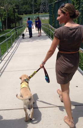 Tatyana Litvak brought her second guide dog puppy, Memphis, home in July. Her first graduated from the Guide Dog Foundation in June.