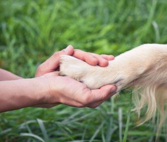 holding dog paw
