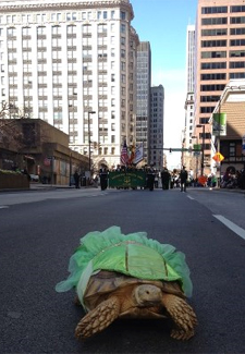 turtle in a dress in a parade