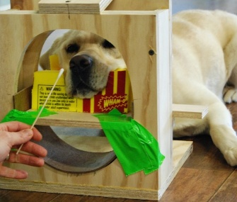 Kady, a Lab involved in the study, trains for the experiment in a mock-up scanner.